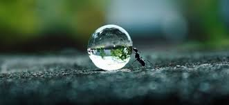 ant pushing a crystal globe