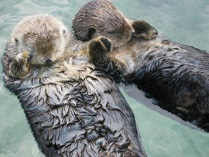 creative, creativity, partnership, otters