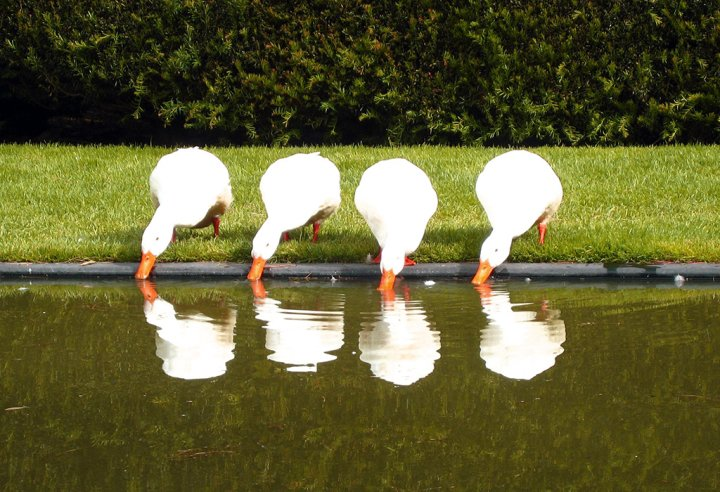ducks lined up in a row, creative realignment