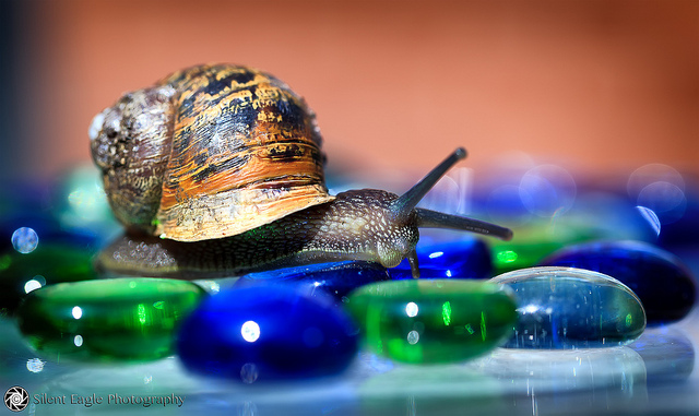 creative mold, creativity, snail