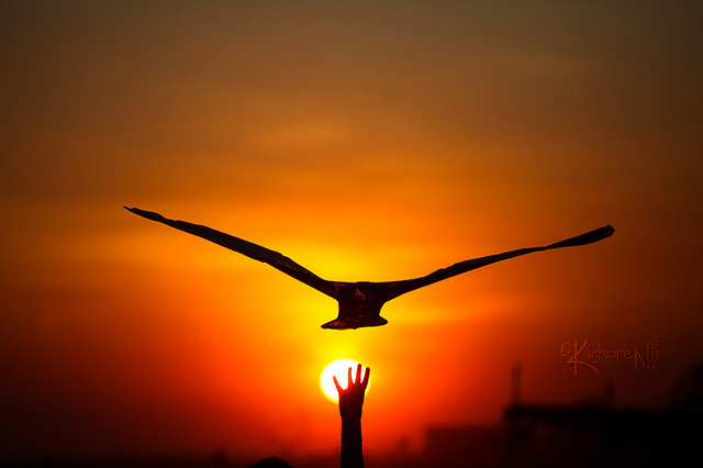 creativity, creative, sunset bird
