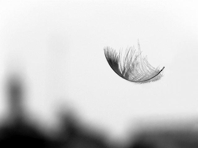 creativity, intuition, feather