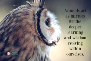Tap into Animal Symbolism to Inspire Creativity and Hone Intuition